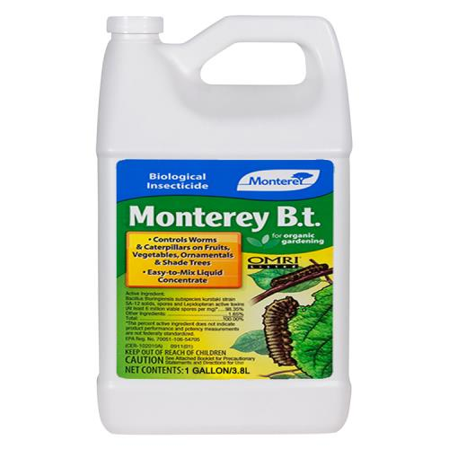 Monterey B.t. Gallon